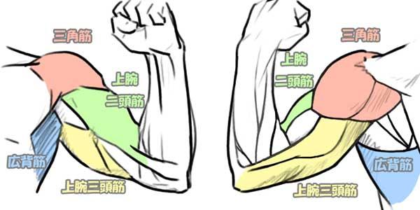 上腕の筋肉