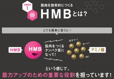 HMBとアミノ酸の働き