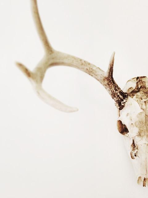 鹿の角と骨