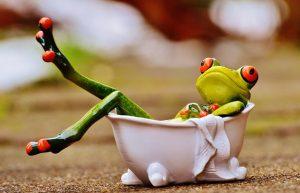 湯船につかる蛙