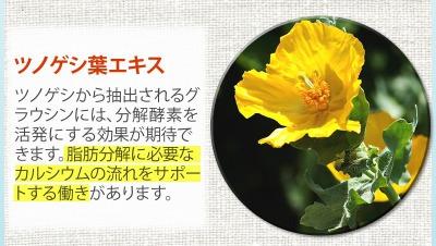ボディクラッシュの効果ツノゲシ葉エキス