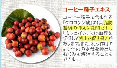 ボディクラッシュの効果コーヒー種子エキス