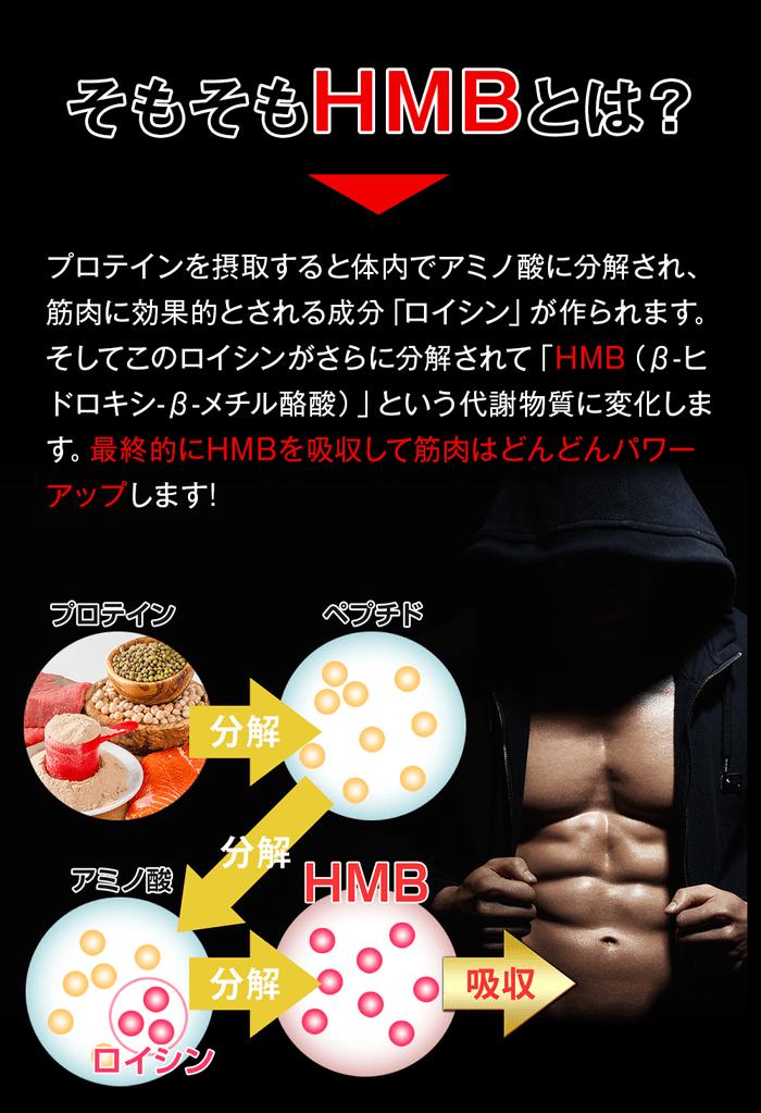 鍛神に含まれるHMBの説明図