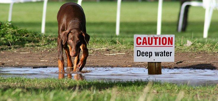 注意喚起 犬