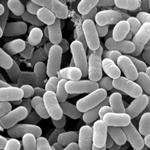 ライジングメタボ 乳酸菌