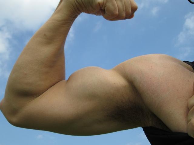男性 腕 筋肉