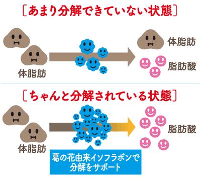 シボヘール2脂肪の分解仕組み