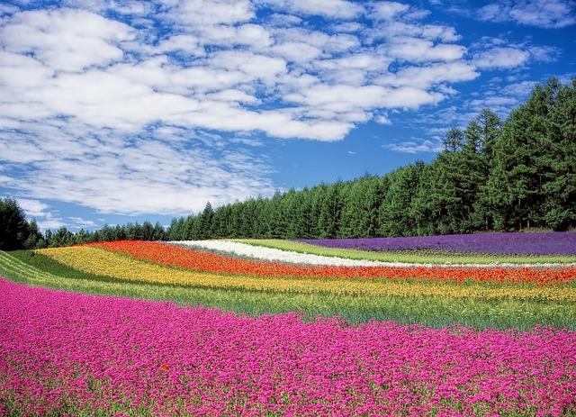 花畑 日本