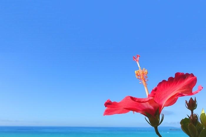 お花 お空