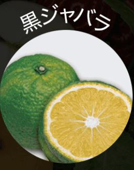 黒汁(KUROJIRU) 黒ジャバラ