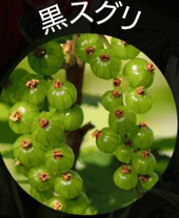 黒汁(KUROJIRU) 黒スグリ