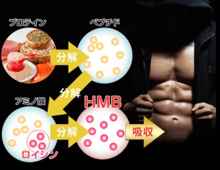 鍛神_HMBの説明